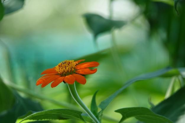 Pomarańczowy Kwiat Z Niewyraźne Tło Darmowe Zdjęcia