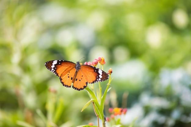 Pomarańczowy Monarchiczny Motyl Z Kwiatem Premium Zdjęcia