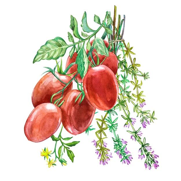 Pomidor roma z tymiankiem. akwarela ilustracja. Premium Zdjęcia