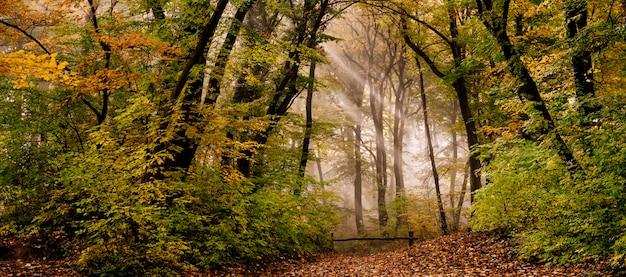 Poranna mgła w lesie Premium Zdjęcia