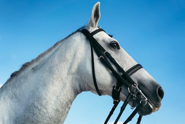 Portratit Jeździecki Biały Koń, świat Koni. Premium Zdjęcia