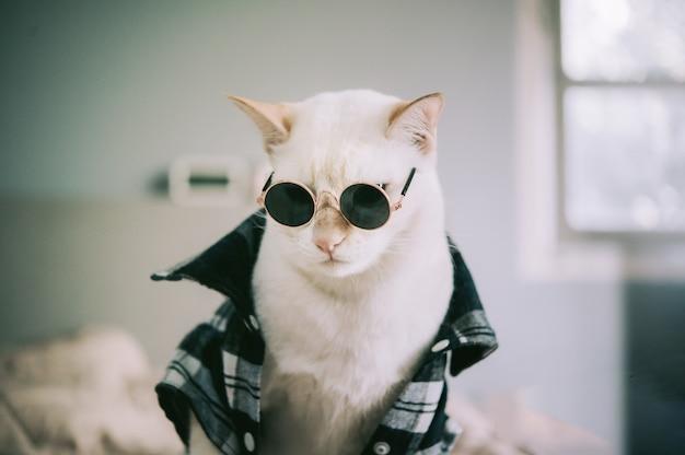 Portret Biały Kot Jest Ubranym Szkła Premium Zdjęcia