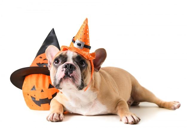 Portret francuski buldog z kapeluszowym halloween Premium Zdjęcia