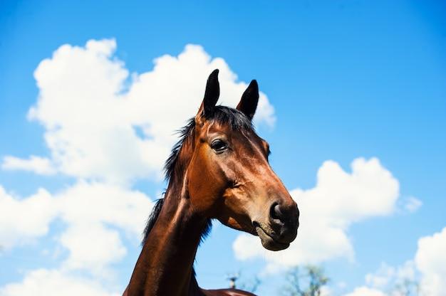 Portret Konia Na Niebieskim Niebie Premium Zdjęcia