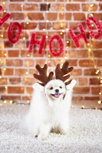 Portret ładny Pies Z Porożem Renifera Darmowe Zdjęcia