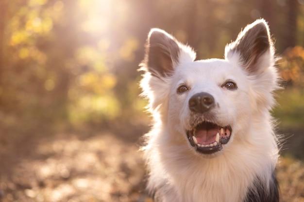 Portret Pięknego Psa Premium Zdjęcia