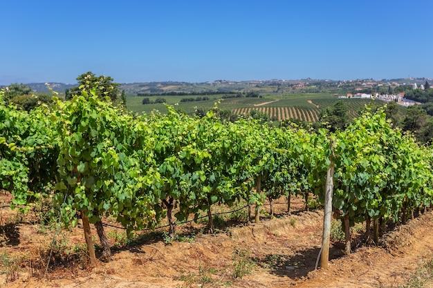 Portugalskie Winnice Strefy Alentejo. Premium Zdjęcia