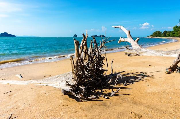 Powalone Drzewo Na Plaży W Lecie Premium Zdjęcia