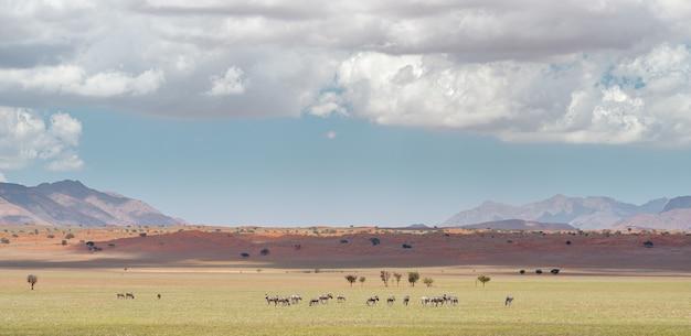 Poziome Ujęcie Krajobrazu Na Pustyni Namib W Namibii Pod Zachmurzonym Niebem Darmowe Zdjęcia