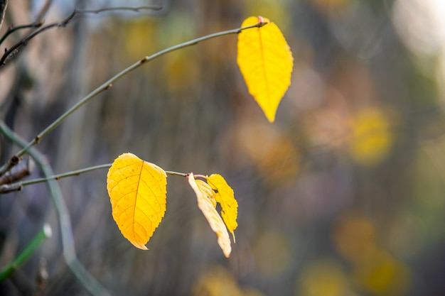 Pozostawiony Nad żółtymi Liśćmi Na Nagich Gałęziach Na Zewnątrz Jesienią Premium Zdjęcia