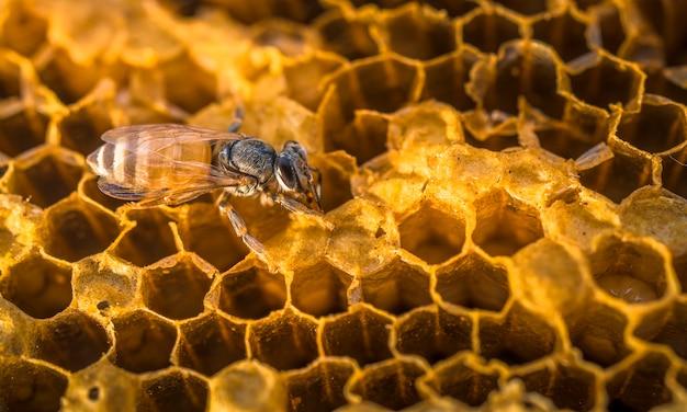 Pracujące Pszczoły O Strukturze Plastra Miodu Ze Słodkim Miodem. Premium Zdjęcia