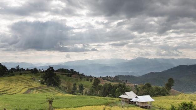 Promień Słońca Na żółtym Tarasowym Polu Ryżowym Z Tradycyjną Drewnianą Chatą Premium Zdjęcia