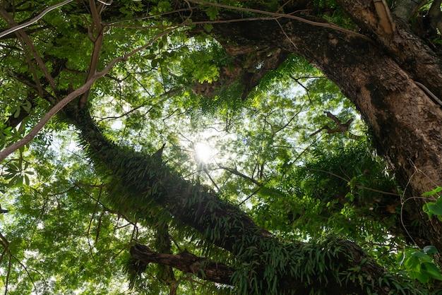 Promienie Słońca Wpadające Przez Drzewa Tworzą Czarującą Atmosferę W świeżym Zielonym Lesie. Premium Zdjęcia