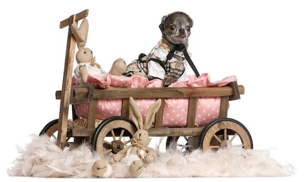 Przebrany Chihuahua Siedzi W Wozie Dla Psa Z Wypchanymi Wielkanocami Zwierzętami Premium Zdjęcia