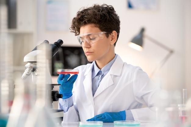 Przemyślany Młody Specjalista Laboratoryjny W Zakresie Okularów I Rękawic Ochronnych, Przyglądający Się Czerwonej Substancji Na Płytce Petriego Podczas Wykonywania Badań W Laboratorium Premium Zdjęcia