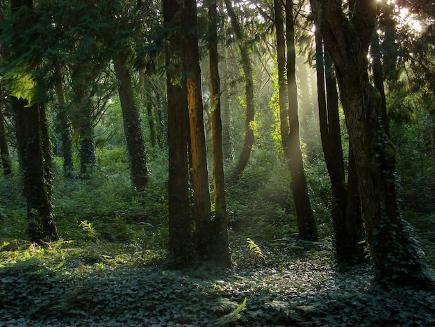 Przepiękna Sceneria Słońca świecącego Nad Zielonym Lasem Pełnym Różnego Rodzaju Roślin Darmowe Zdjęcia