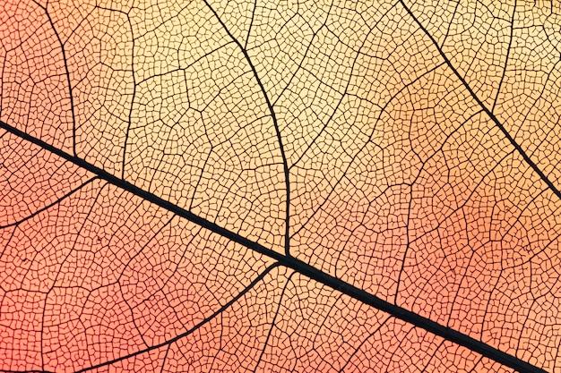 Przezroczysty Liść Z Pomarańczowym Podświetleniem Darmowe Zdjęcia