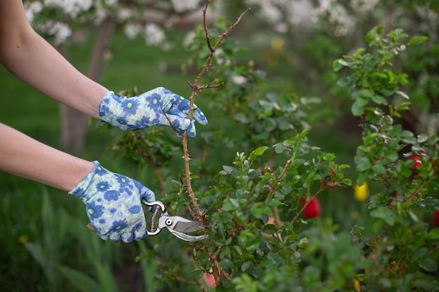 Przycinanie i cięcie roślin w ogrodzie na wiosnę Premium Zdjęcia