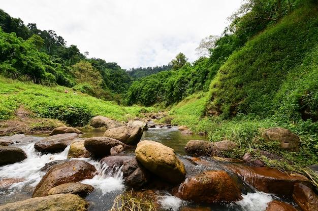 Przygoda W Dużym Lesie. Premium Zdjęcia