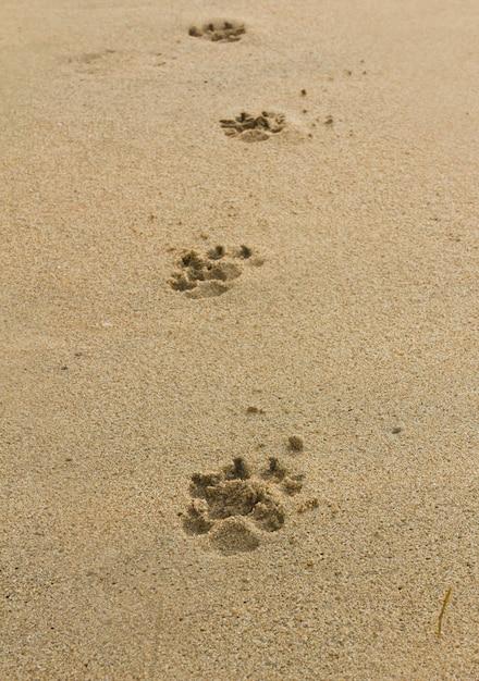 Psy ślady Stóp Premium Zdjęcia