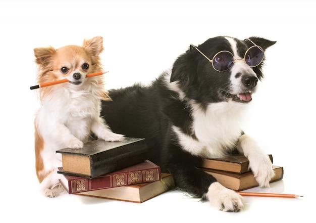 Psy W Szkole Premium Zdjęcia