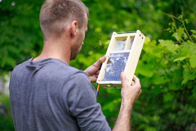 Pszczelarz Patrzy Na Pszczołę W Pudełku W Pasiece. Wydobywanie Miodu Z Behive. Premium Zdjęcia