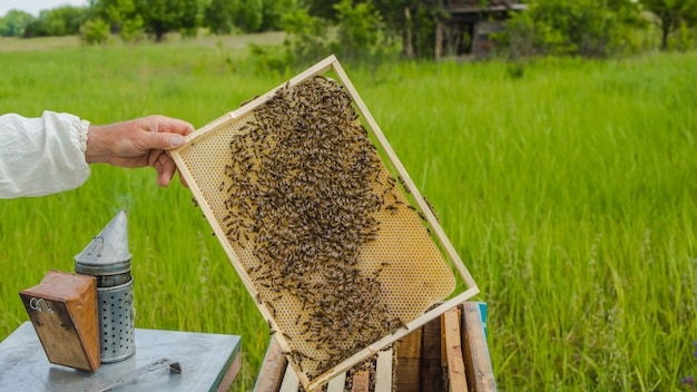 Pszczelarz Pokazujący Plaster Miodu W Ramce. Pszczelarz W Pracy. Ramki Ula Pszczół. Pszczelarstwo Premium Zdjęcia