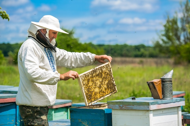 Pszczelarz Pracuje Z Pszczołami I Ulami Na Pasiece. Pszczelarz Na Pasiece. Premium Zdjęcia