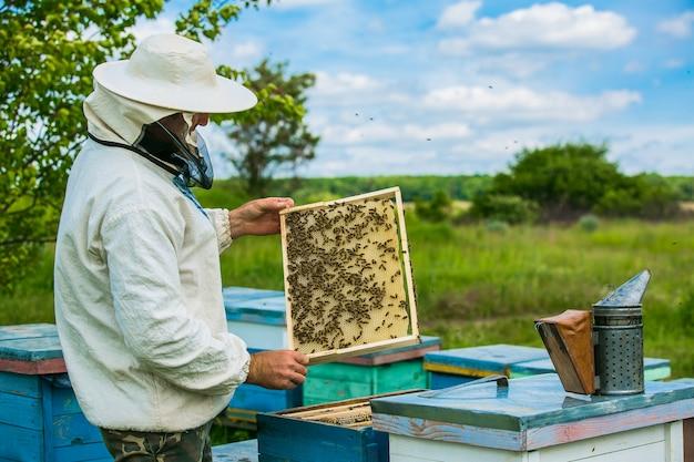 Pszczelarz Pracuje Z Pszczołami I Ulami Na Pasiece. Ramki Ula Pszczół Premium Zdjęcia