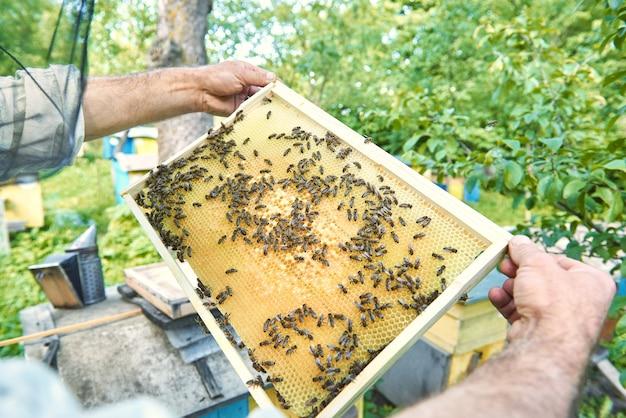 Pszczelarz Wyciągający Plaster Miodu Z Pszczołami Z Ula W Swojej Pasiece. Darmowe Zdjęcia