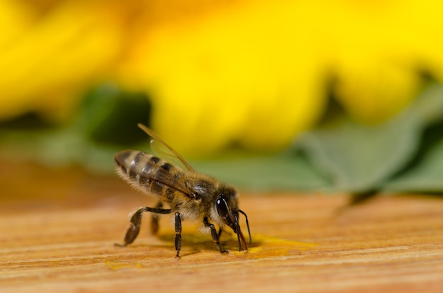Pszczoła Na Drewnianym Stole Na Zewnątrz W Ogrodzie Premium Zdjęcia