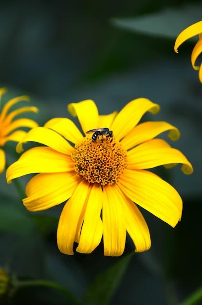 Pszczoła Na Kwiatku Zbierającym Pyłek, Aby Stworzyć Miód Premium Zdjęcia