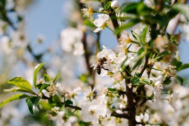 Pszczoła Siedzący Na Kwiacie Premium Zdjęcia