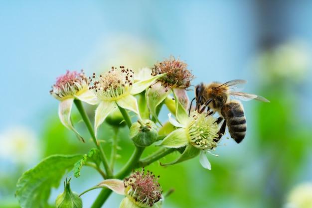 Pszczoła Zbierająca Pyłek W Letnim Słońcu Premium Zdjęcia