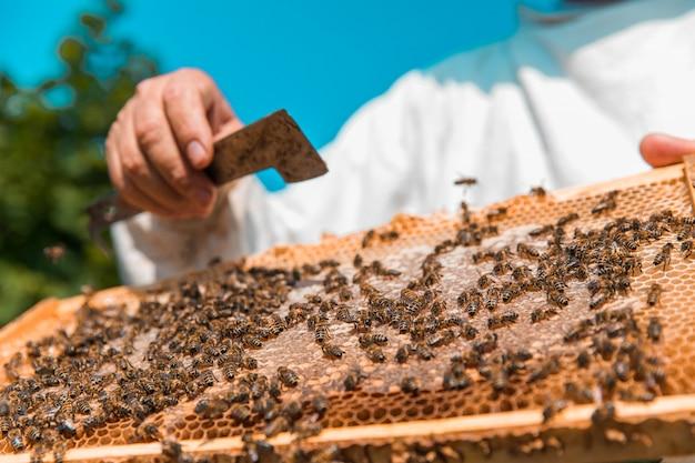 Pszczoły Miodne Na Drewnianym Ulu. Wysokiej Jakości Zdjęcie Darmowe Zdjęcia