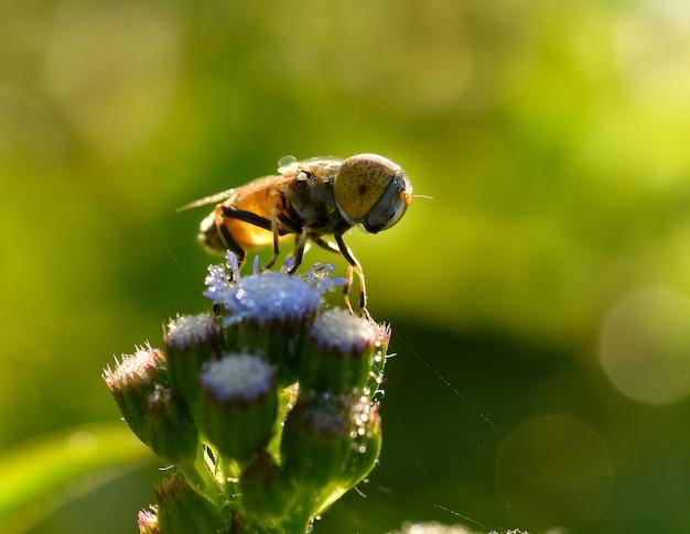 Pszczoły Na Kwiatach Rano Premium Zdjęcia