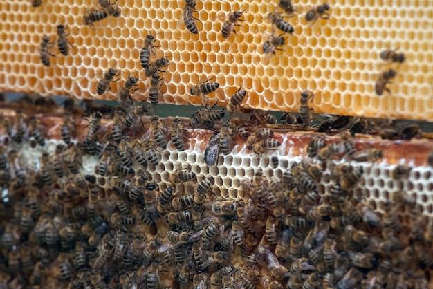 Pszczoły Na Plastrach Miodu Z Miodem. Premium Zdjęcia