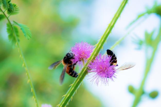 Pszczoły Na Pyłku W Lesie. Premium Zdjęcia