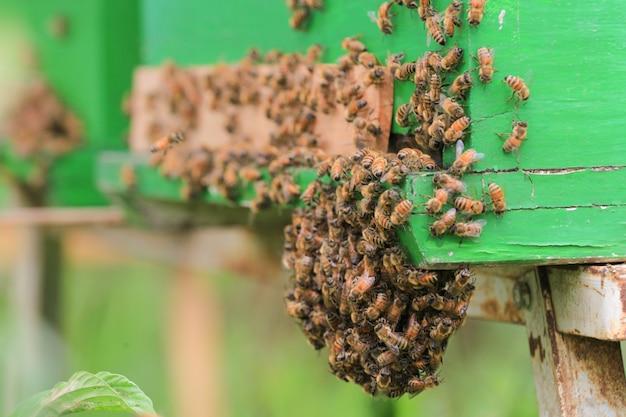 Pszczoły W Ulu Na Zewnątrz Premium Zdjęcia