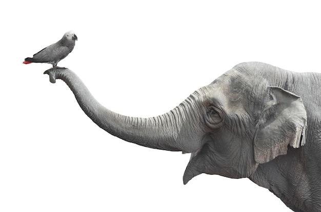Ptak Spoczywa Na Tułowiu Słonia Premium Zdjęcia