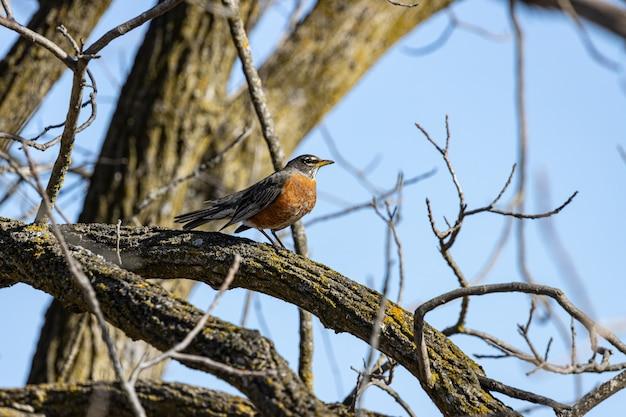 Ptak Stojący Na Gałęzi Drzewa Darmowe Zdjęcia