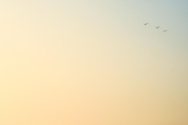 Ptaki latające na niebie o zachodzie słońca w minimalistycznej scenie Premium Zdjęcia