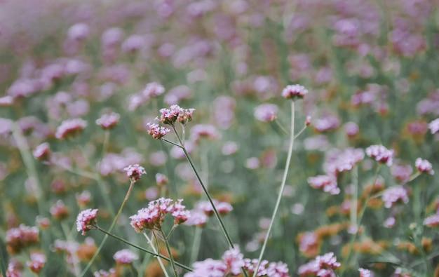 Purpura Kwiatu Trawy Pole Na Natury Botaniki łąkowym Kwiacie Premium Zdjęcia