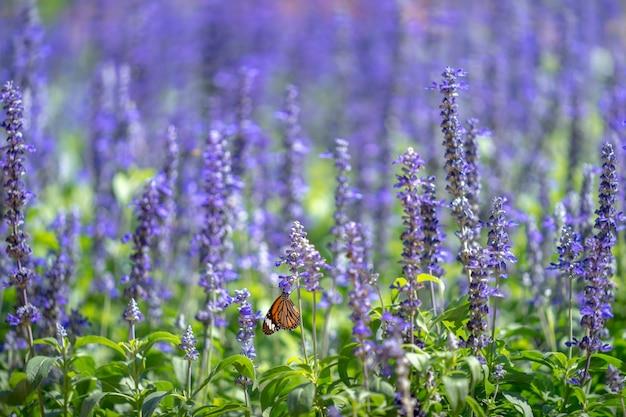 Purpurowe Kwiaty Kwitnące W Parku. Premium Zdjęcia