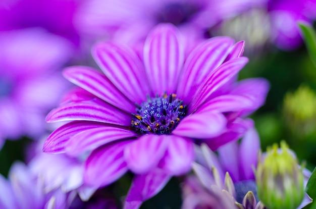 Purpurowe Zamazane Kwiaty To Rozmyte Tło Wzorzyste. Premium Zdjęcia