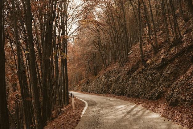 Pusta Droga Między Wysokimi Drzewami W Lesie W Ciągu Dnia Jesienią Darmowe Zdjęcia