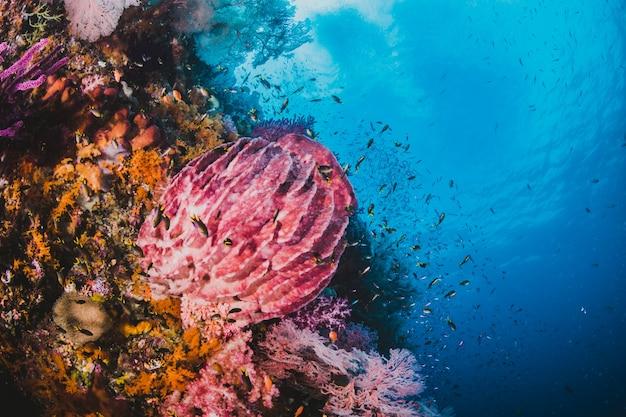 Rafa koralowa z ryb wokół jasno niebieski wody na backg Darmowe Zdjęcia
