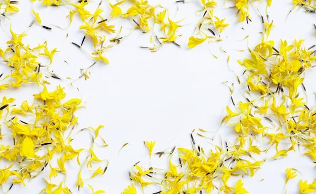 Rama Wykonana Z Płatków Kwiatów Nagietka Na Białym Tle Premium Zdjęcia