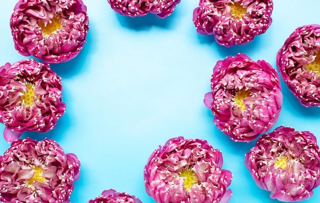 Rama Wykonana Z Różowego Kwiatu Lotosu Na Niebieskim Tle. Widok Z Góry Premium Zdjęcia