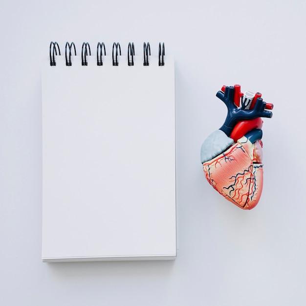 Realistyczne Serce I Notebook Na Pierwszym Planie Darmowe Zdjęcia